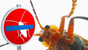 Schadlingsbekampfung In Berlin Spandau Furst